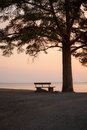 Bench and tree silhouette viewing to serene lake Royalty Free Stock Photo