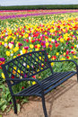 Bench and Tulips Royalty Free Stock Photo