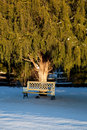 Bench under large conifer tree Royalty Free Stock Images