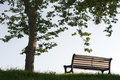 Bench under rhe tree Royalty Free Stock Images