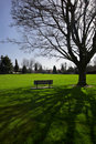 Bench under shade tree Royalty Free Stock Photos