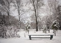 The bench in winter park parkwinter day snowy lots of trees lake snow frost Stock Photography