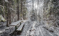 Bench in the woods. Royalty Free Stock Photo