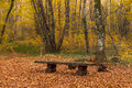 Bench in the woods Royalty Free Stock Photo