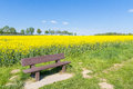 The bench and yellow field Royalty Free Stock Photo