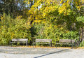 Benches in park at autumn three front of colorful trees and bushes Stock Photos