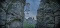 Bastei Tree bent on rocks. Royalty Free Stock Photo