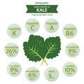Benefit health of kale, info graphic food, vegetable vector