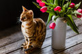 Bengal Cat With Tulips