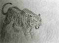 Bengal tiger at sunset hand drawing of Stock Image