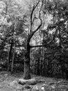 Benson Park New Hampshire