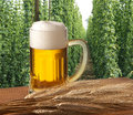 Ber with hop field Royalty Free Stock Photos