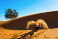 Berber playing and throwing with sands in desert sahara creating angel morocco Stock Photo