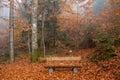 Berchtesgadener Land, autumn forest, bench Royalty Free Stock Photo