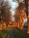 Bergamo, Italy. The Old city. One of the beautiful city in Italy. The tree-lined avenue along the Venetian walls Royalty Free Stock Photo