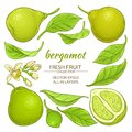 Bergamot elements set