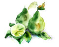 Bergamot fruits green watercolor illustration Stock Photography