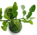 Bergamot and green leaf on white background Royalty Free Stock Images