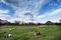 Berlin germany june th groups of young adults and teenagers scattered on the grass at gorlitzer park located in kreuzberg east Stock Image