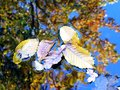 Berlin Tiergarten in Autumn Royalty Free Stock Photo