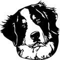 Berna perro