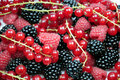 Berries background Stock Images