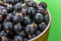 Berries black currants in bowl covered with dew Royalty Free Stock Images