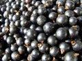 Berries of blackcurrant sweet dessert black Stock Photos