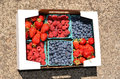 Berries box of fresh strawberry raspberry blueberry Royalty Free Stock Photos