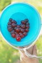 Berries in bucket heart shaped blue Stock Images