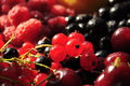Berries close-up Royalty Free Stock Photo