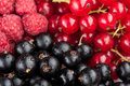 Berries composition currant and raspberry Royalty Free Stock Photo