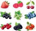 Berries detailed photo realistic set Stock Images