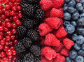 Berries mix of differrent full frame image Stock Photo