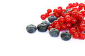 Berries pile of red currants blueberries isolated on white background Royalty Free Stock Photos