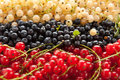 Berries ripe blueberries red and white currants closeup Royalty Free Stock Image