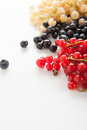 Berries ripe blueberries red and white currants on a white background Stock Image