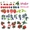 Berries Set Vector Illustration. Strawberry, Blackberry, Blueberry, Cherry, Raspberry, Red currant. Berries and their Royalty Free Stock Photo