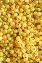Berries of a white currant Stock Image