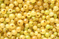 Berries of a white currant for backgrounds or textures Royalty Free Stock Image