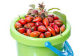 Berries of wild rose in a bucket Royalty Free Stock Images