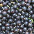 Berry of blackcurrant background closeup close up Stock Image