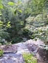 Berry Creek falls 2 Royalty Free Stock Photo