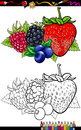 Berry fruits illustration for coloring book or page cartoon of four like blueberry and blackberry and raspberry and strawberry Royalty Free Stock Photo