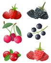 Berry icon set.