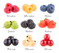 Berry images collection of Stock Photography