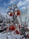 Berry lodu Zdjęcia Royalty Free