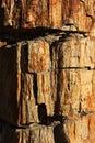 Beschaffenheit der Oberfläche des versteinerten Holzes Lizenzfreies Stockbild