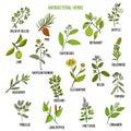 Best antibacterial herbs Royalty Free Stock Photo