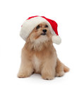 Best christmas gift cute mixed breed dog in hat isolated in white background with clipping path Royalty Free Stock Photo